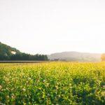 Dusty Barrel Distillery respects the land